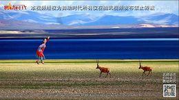 応子春丽广场舞《藏羚羊》原创舞蹈 附正背面口令分解教学演示